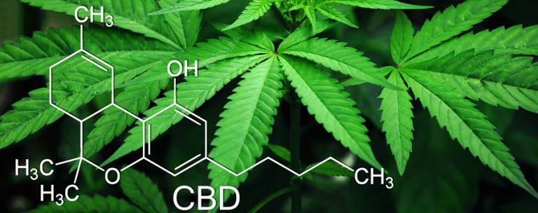 marijuana leaves and CBD